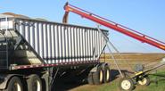 grainharvest