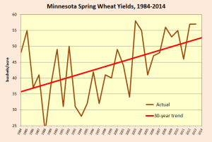 MN spring wheat yields