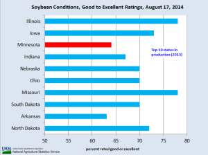 soybean conditions August 17 2014